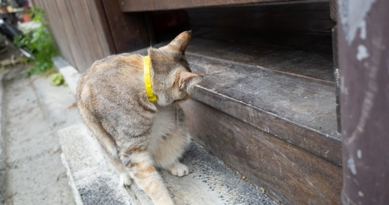 Flea Treatment Is the Best for My Cat